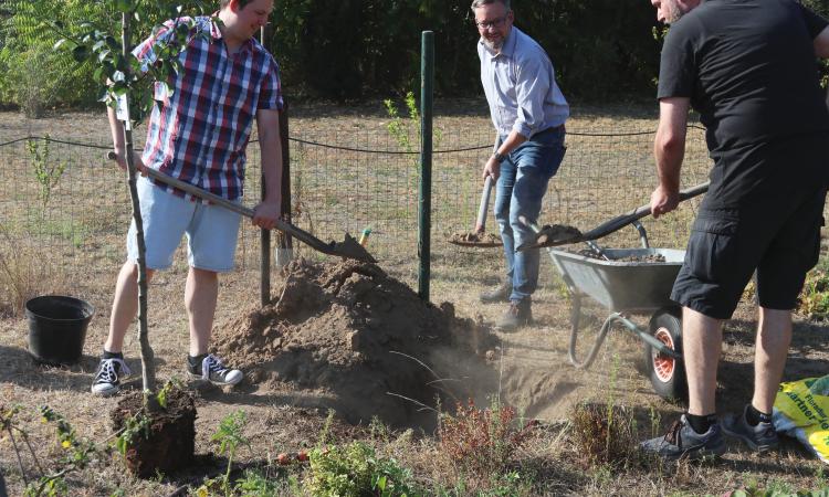 Die Mitglieder des SPD-Ortsvereins Germersheim & Sondernheim haben m Rahmen des Umwelt- und Freiwilligentages zwei Obstbäume gepflanzt. Tatkräftige Unterstützung erhielten sie