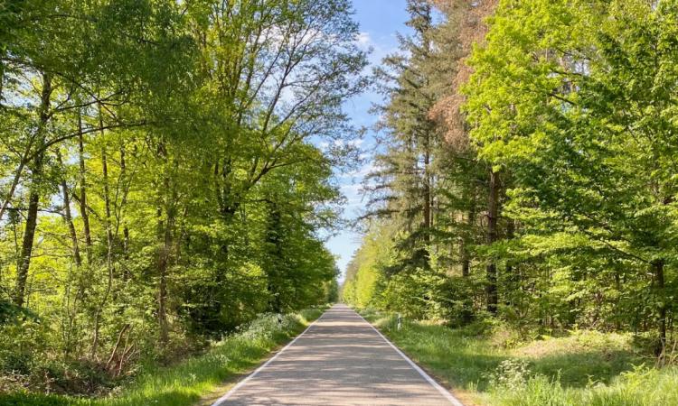 Zwei Jahrzehnte steht der geplante Bienwaldradweg zur Diskussion, ist in Planung und steht dann wieder zur Diskussion. Die neuerliche öffentliche Debatte überrascht die Mitglieder der SPD in Scheibenhardt, Steinfeld und Schaidt und sie beziehen klare Position für den Bau des Radwegs entlang..